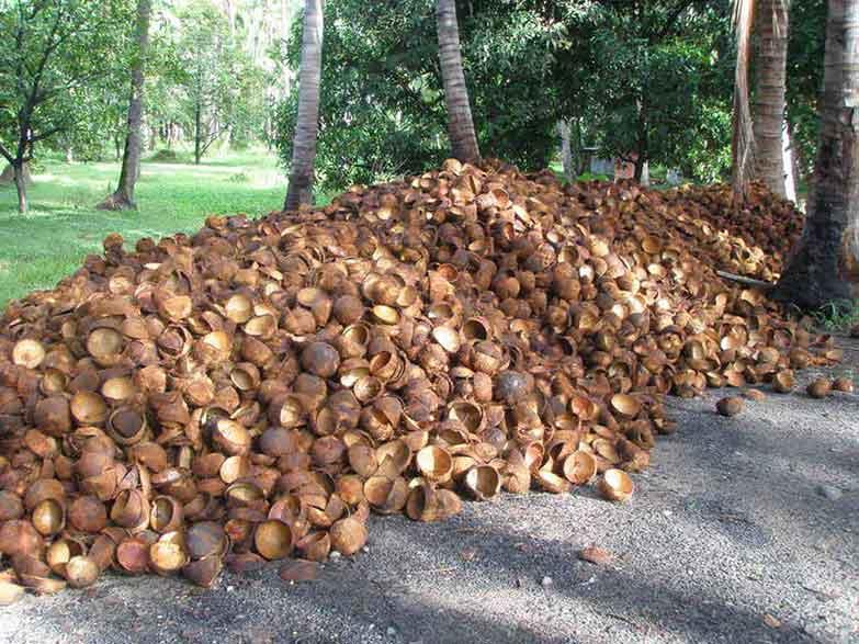 Nguyên liệu để sản xuất than hoạt tính gáo dừa